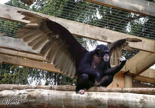 Flying_monkey