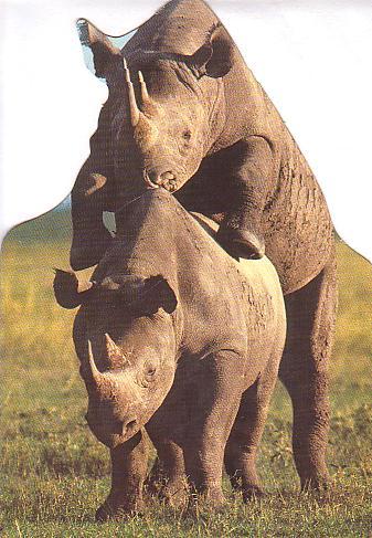 Rhino_losing_virginity